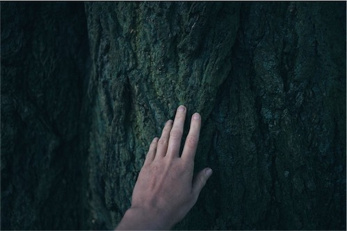 A HAND TOUCHING A TREE